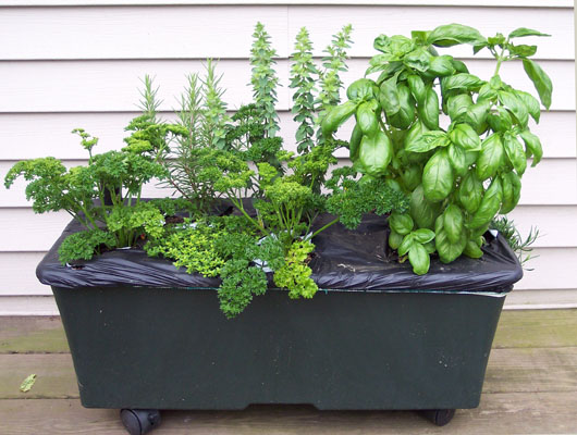EarthBox With Herbs