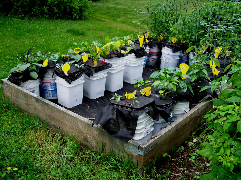 Self Watering Containers Made From Buckets Crestone Solar School